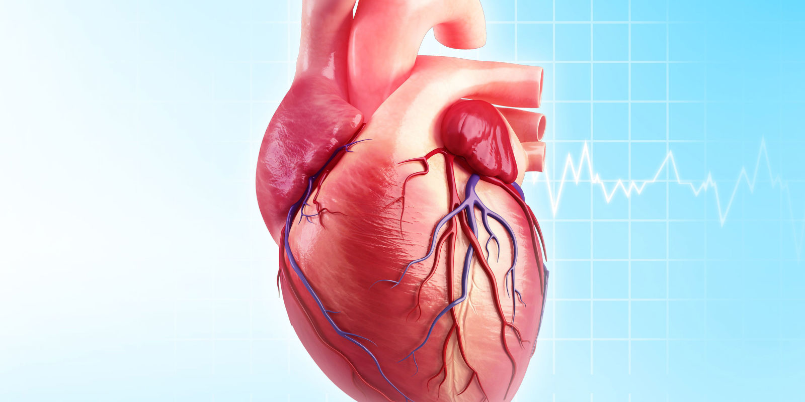 تصویر از همه آنچه که باید در مورد قلب بدانیم