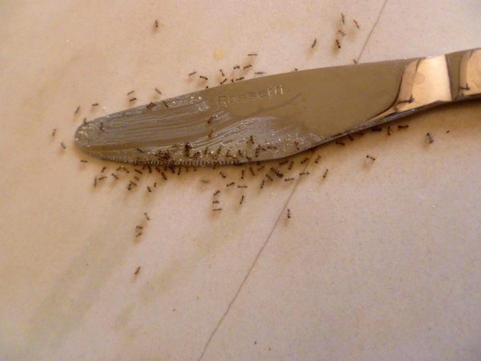 تصویر از از بین بردن مورچهها در یک چشم به هم زدن! – بخش اول