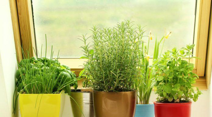 چگونه گل و گیاه را در تابستان شاداب نگه داریم؟