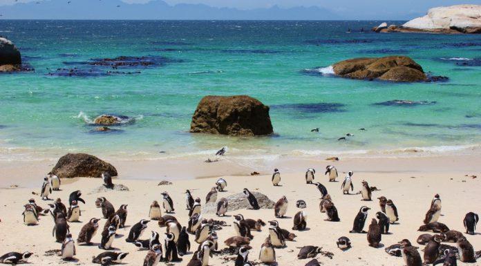 برای دیدن پنگوئنها کجا سفر کنیم؟