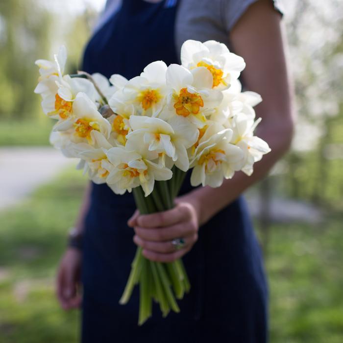 تصویر از نگهداری و کاشت گل نرگس، عروس زمستان