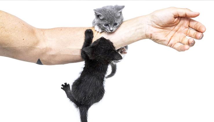 تصویر از ۵ بیماری خطرناک که از گربه به انسان منتقل میشود