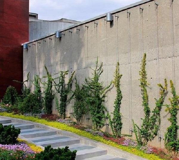 تصویر از دیوار سبز کابلی ، همه چیز درباره این بهشت عمودی!