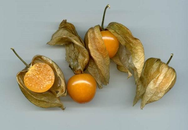 تصویر از عجیبترین میوههای دنیا چه خواصی دارند؟