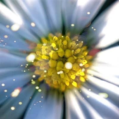 تصویر از آلرژی و ۱۰ نوع گیاه که آن را تشدید میکنند