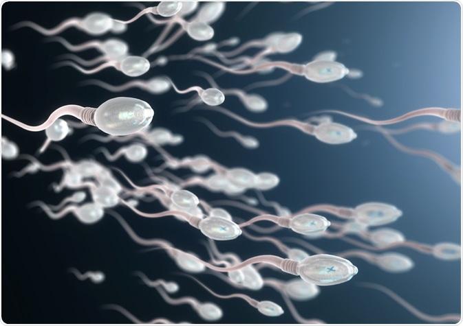 تصویر از عمر اسپرم در هوای آزاد + باورهای نادرست در مورد اسپرمها