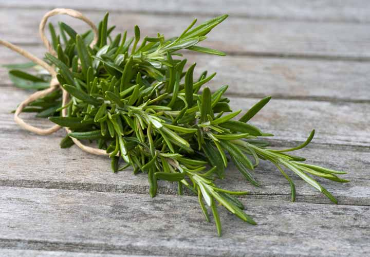 تصویر از خواص رزماری؛ ۱۱ خاصیت این گیاه خوشعطر برای سلامتی و پوست