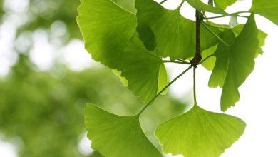 تصویر از ۱۱ دمنوش گیاهی برای تقویت موی سر و کاهش ریزش مو