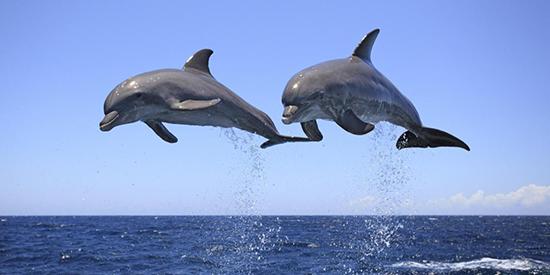 آدمهای کوسهای، آدمهای دلفینی؛ شما کدامید؟