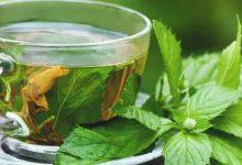 تصویر از خواص پونه؛ ۸ خاصیت چای پونه برای سلامتی